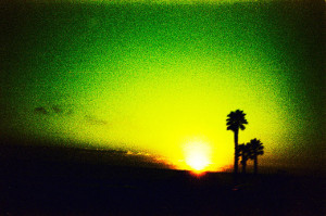 Visions Palm-Trees